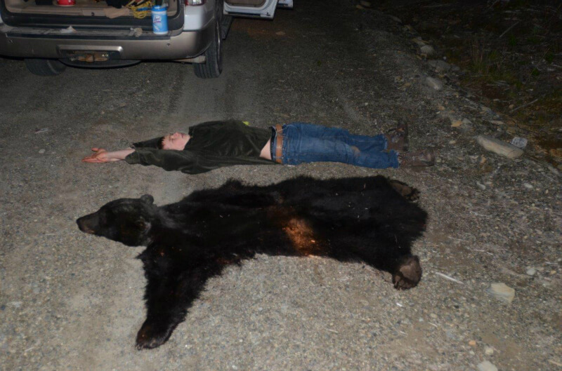 laying down next to the black bear