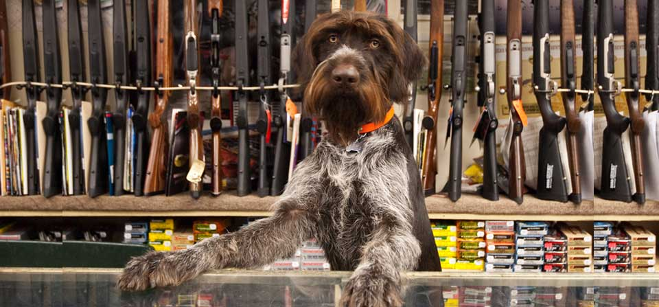 Stillwater Sports - Image of Dog at the Sales Counter
