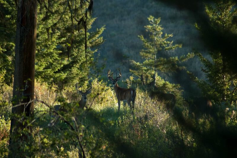 buy hunting and tracking equipment in ladner